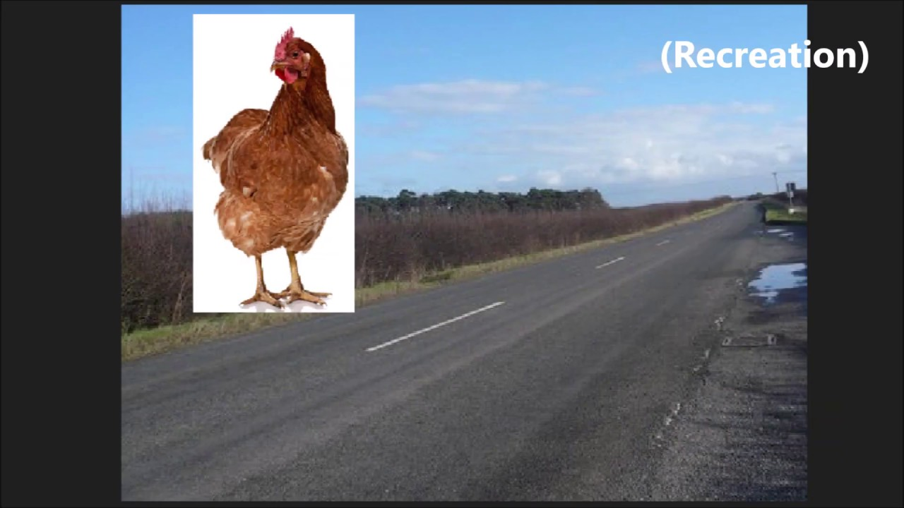 Why did I cross the road?