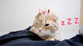 寝室についてきて一緒にお昼寝をする猫たちが可愛すぎた