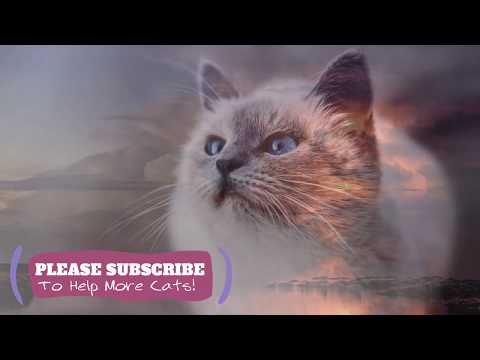 Sleeping Music for Kittens 2 Hours Relaxing ASMR for Your Cats! ☯LCZ113