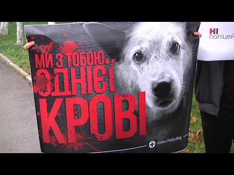 TV7plus: Людині – ліки, собаці – смерть… Підсумки тижня .