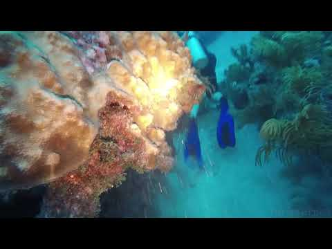 Molasses Reef - Night Dive   8-29-17