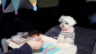 카크닉 | 강아지와 즐기는 언택트 피크닉 | 크로플 챙…