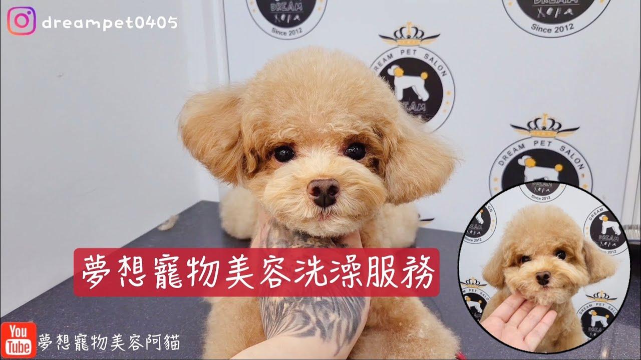 夢想寵物美容的洗澡服務 修剪臉部程度 /Pet grooming 夢想寵物美容 131 寵物美容師阿貓