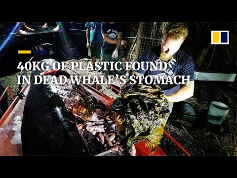 40kg of plastic found in dead whale's stomach