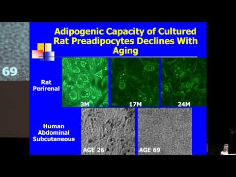 SENS5 - Aging, Adipose Tissue and Cellular Senescence
