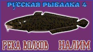 РР4 ВОЛХОВ НАЛИМ РУССКАЯ РЫБАЛКА 4 ВОЛХОВ НАЛИМ RUSSIAN FISHING 4 VOLKHOV RIVER BURBOT