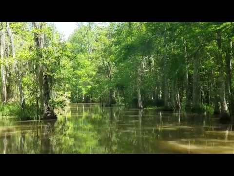 Louisiana Bayou April 2017