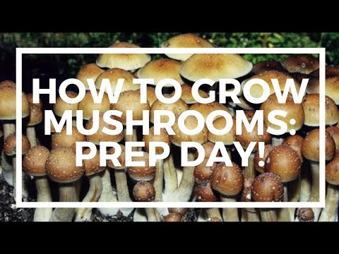 How to grow Mushrooms! Popcorn Tek, Bulk Substrate, and More!
