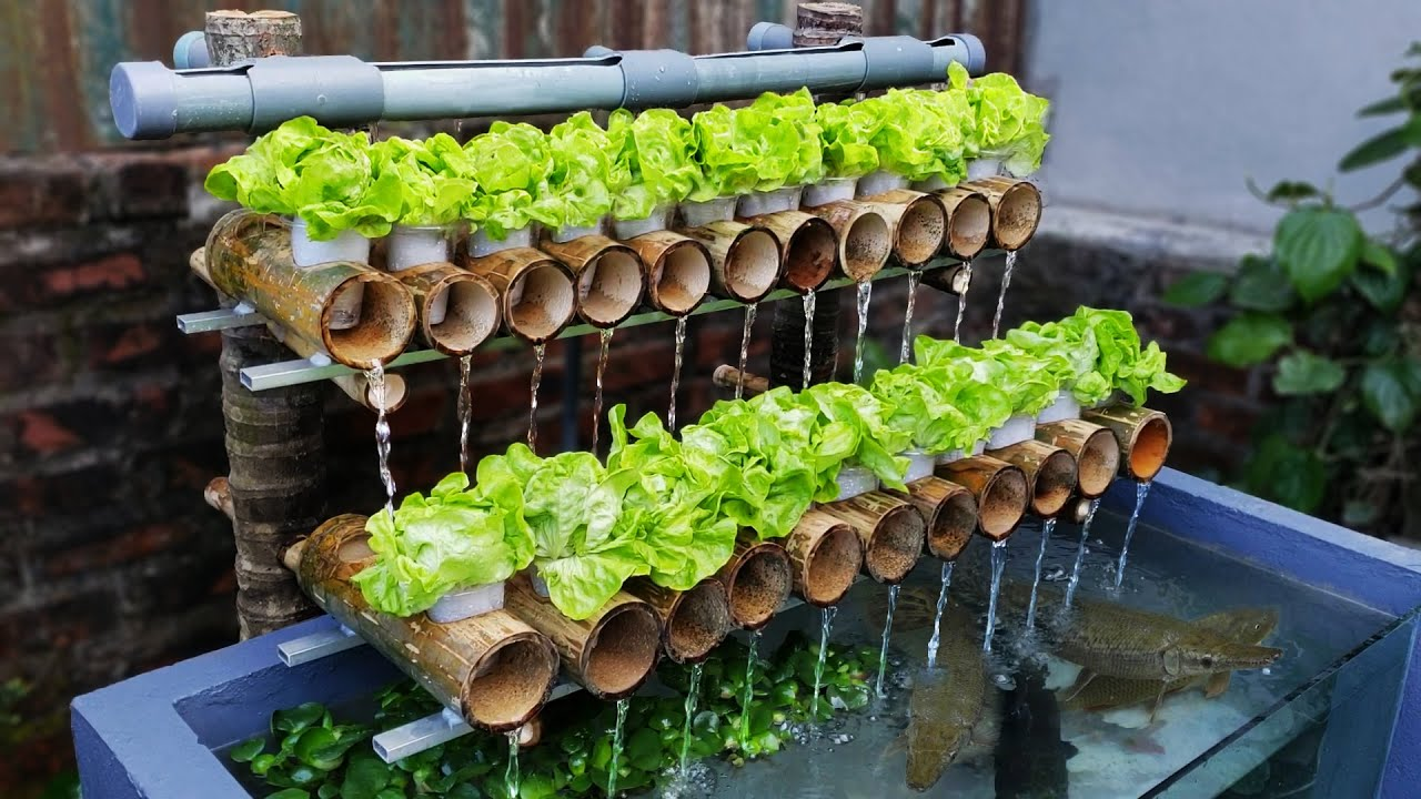 The Secret to Make a Fish Pond Combined with Growing Clean Vegetables