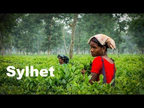 Lifan KPT in the famous tea gardens in Sylhet - Part 11