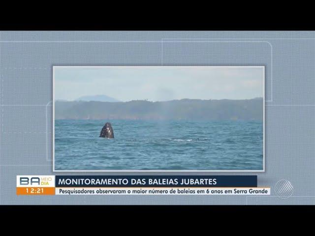 Projeto Baleias na Serra no Bahia Meio Dia