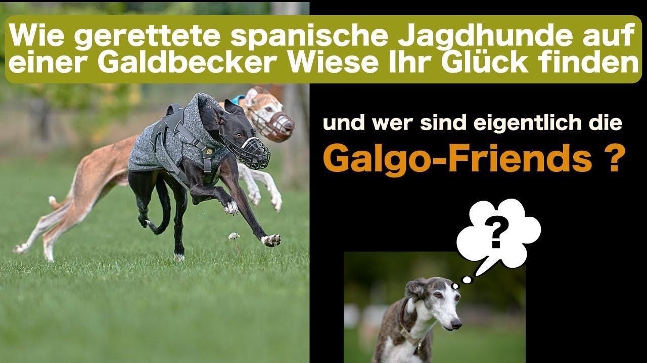 Galgofriends