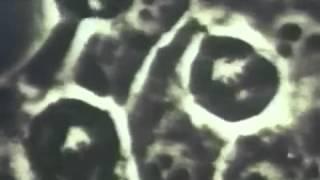 Строение  функции Жизнь клетки (1((2-3))  живая клетка 6