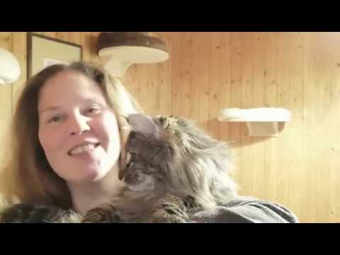 Nordic Verden Norwegian Forest Cat Cattery | Vlog 2. Part 2. - Traveling to Poland