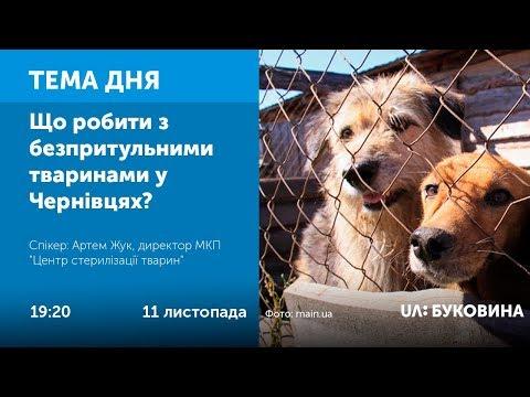 UA: БУКОВИНА: ТЕМА ДНЯ. БУКОВИНА. Що робити з безпритульними тваринами у Чернівцях?