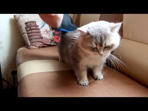 Перчатка-расческа для кошек