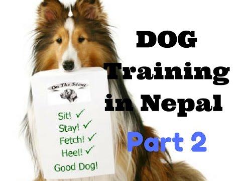 Dog training in Nepal part -2, नेपालमा कुकुर तालीम भाग २