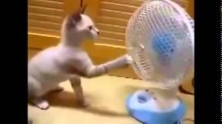 Funny Cat Videos 2014    Komik Kedi Videoları