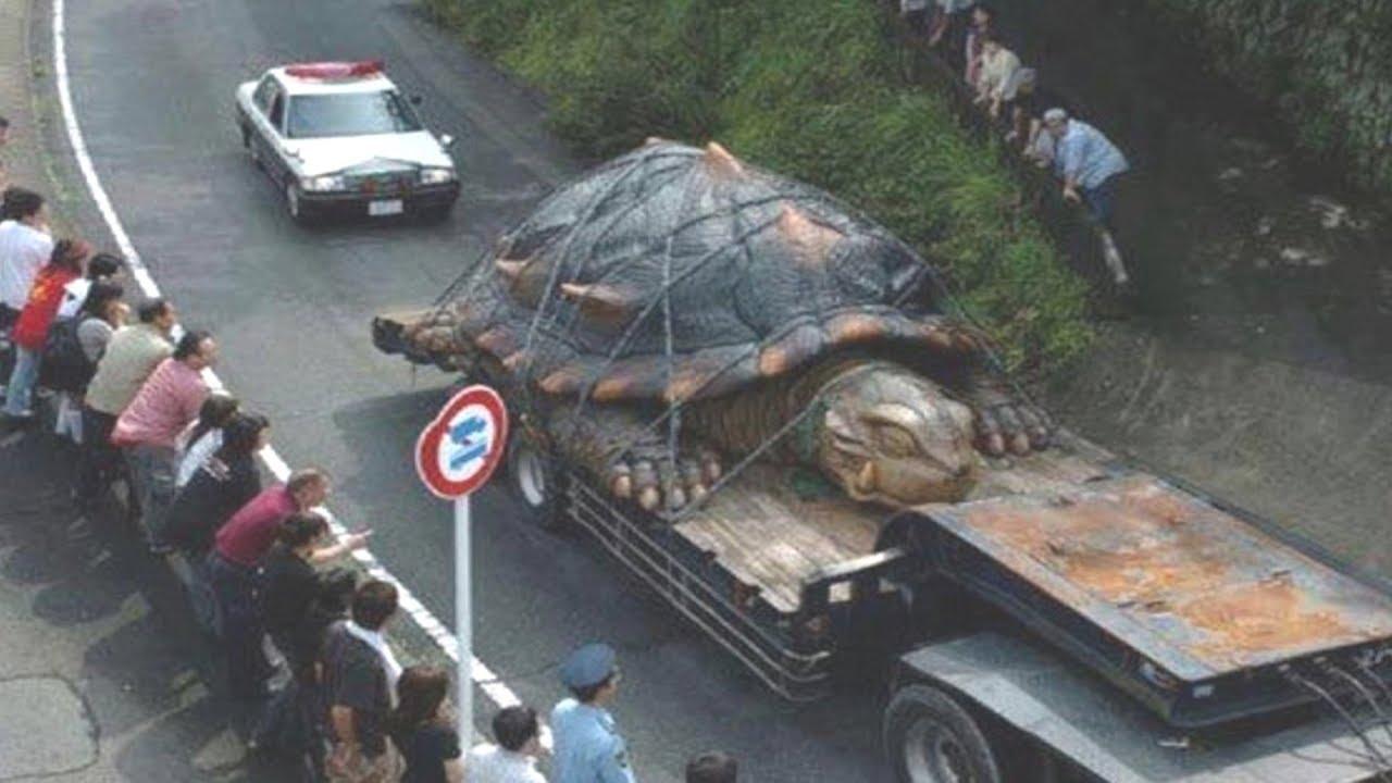 Dünyada Yakalanmiş En Büyük 10 Kaplumbağa Youtube