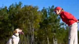 Dog Trainers - Canine Communications