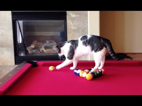 Cat Gets Caught Playing Pool!
