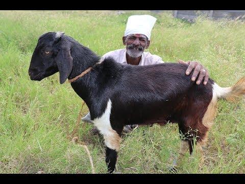 Ramzan Special Mutton BRIYANI Prepared my DADDY / Village Food Factory