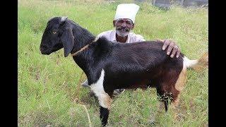 Ramzan Special Mutton BRIYANI Prepared my DADDY / Village Food Factory thumbnail
