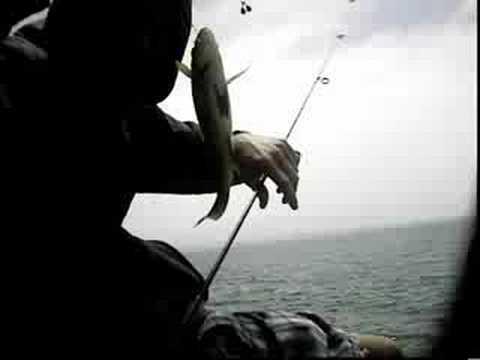 Pier fishing trip santa barbara ca youtube for Santa barbara fishing report