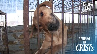 Dogs Desperately Biting Off The Bars Out Of Hunger (Part 1) | Animal in Crisis EP210