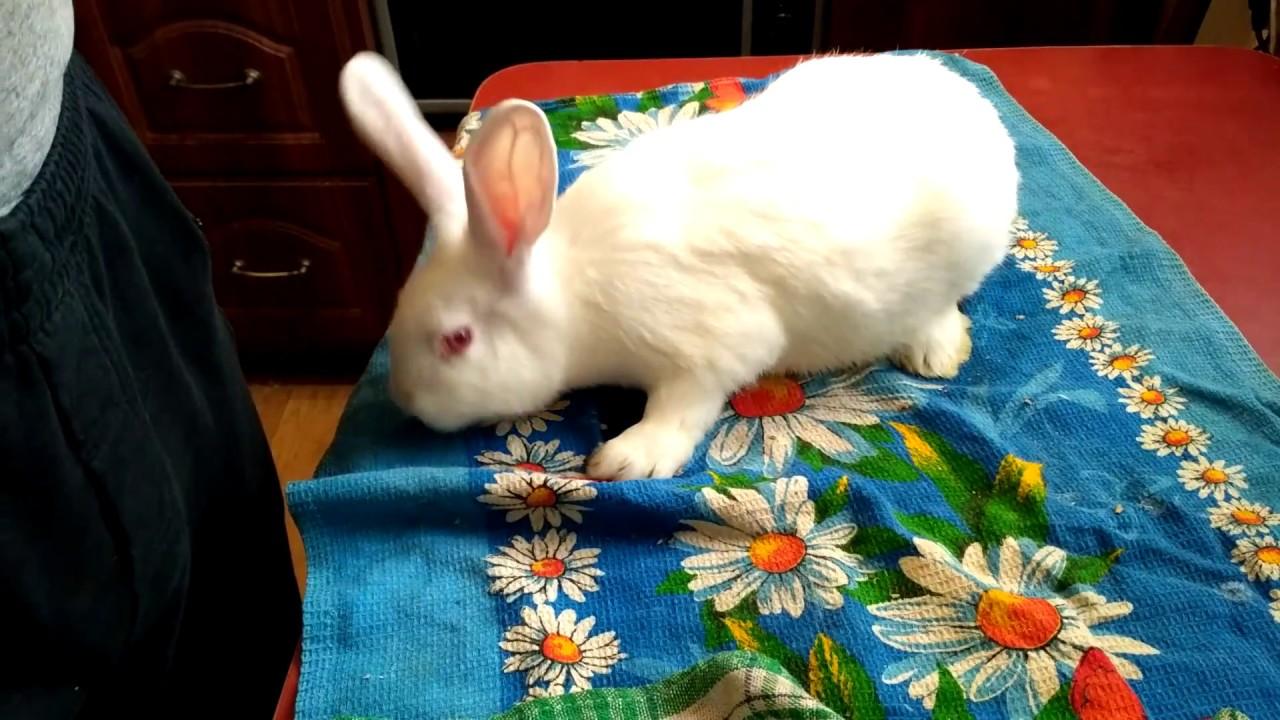 Весы для кроликов - YouTube