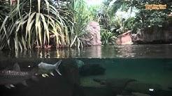 Gondwanaland im Zoo Leipzig