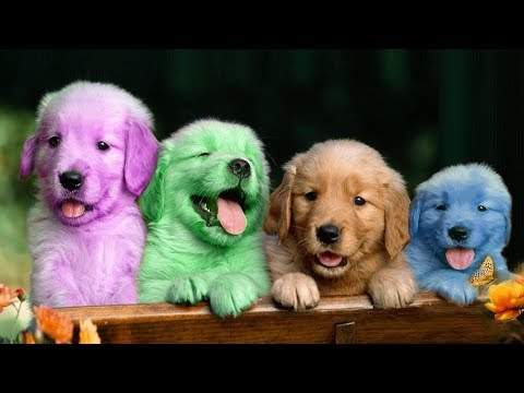 Cute Puppy Dog Color Colorful Learning Color Video For Kids Finger Family Nursery Rhyme Song