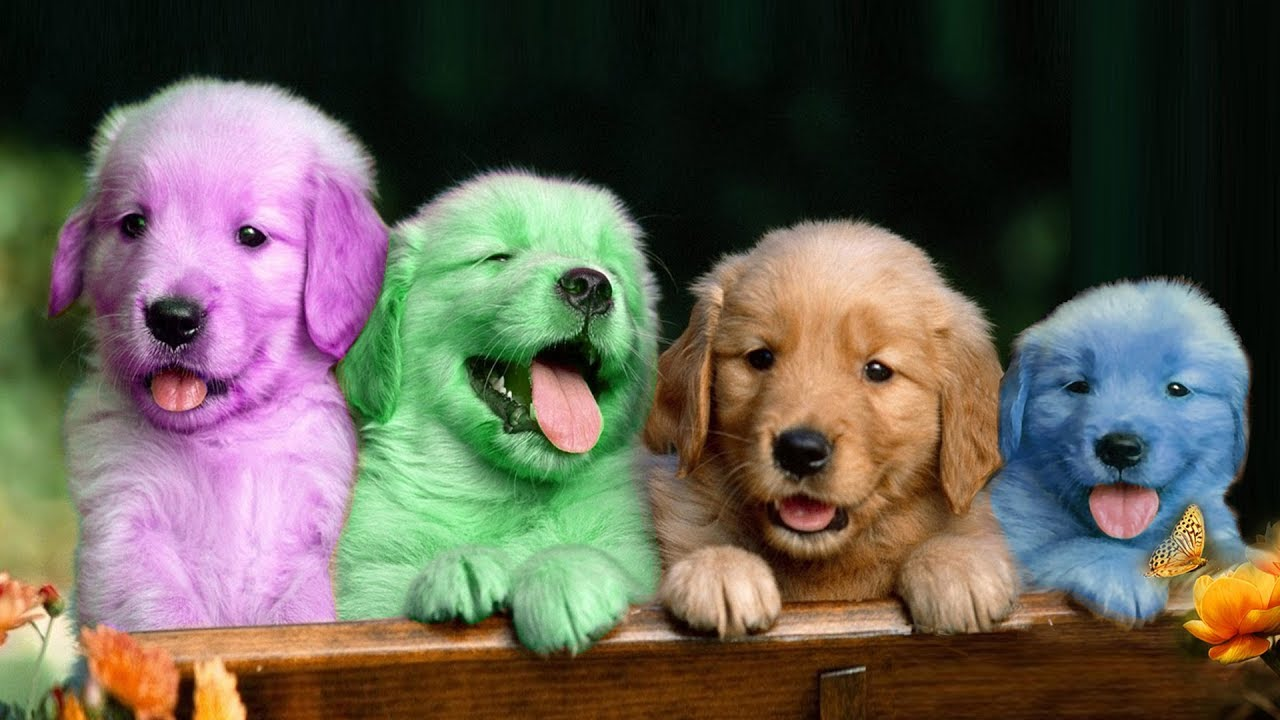 Cute Puppy Dog Color Colorful Learning Video For Kids Finger Family Nursery Rhyme Song