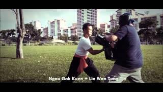 Hung Gar Dynamic Mitts Striking/Padwork