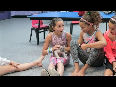 I Want To Be a Lion When I Grow Up (WK 300.3)   Bratayley