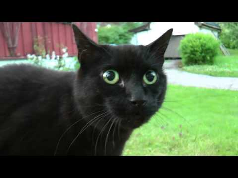 Mad cat - Meow Meeeeoow!