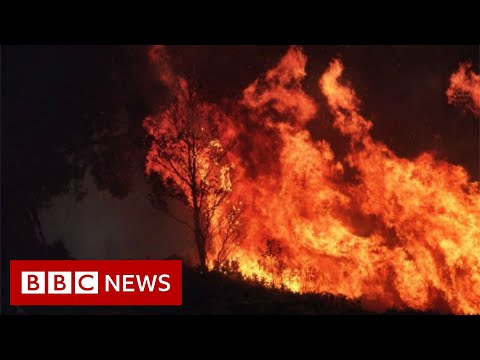 Australia fires: Climate change increases the risk of wildfires - BBC News