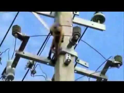 Tội nghiệp chú khỉ bị điện giật.mp4