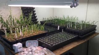 GROW SEEDS INDOORS Tips for DIY Germination Station