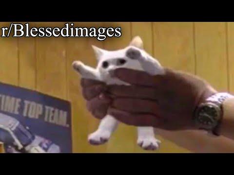 r/Blessedimages | remember shortcat, jane?