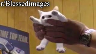 r/Blessedimages   remember shortcat, jane?