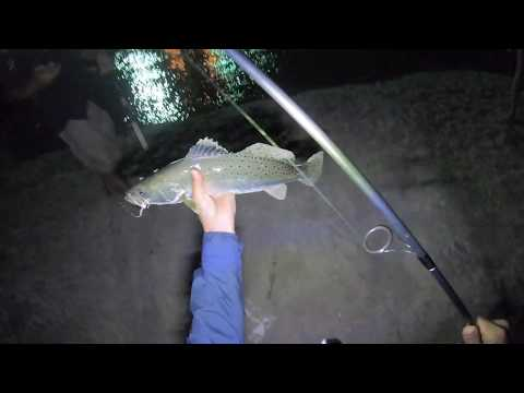 NICE SPECKLED TROUT San Luis Pass Galveston/ Freeport TX Night Fishing
