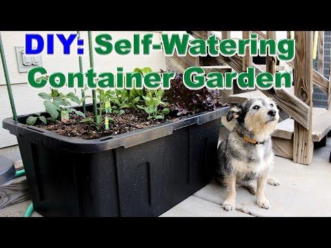 diy:-self-watering-container-garden