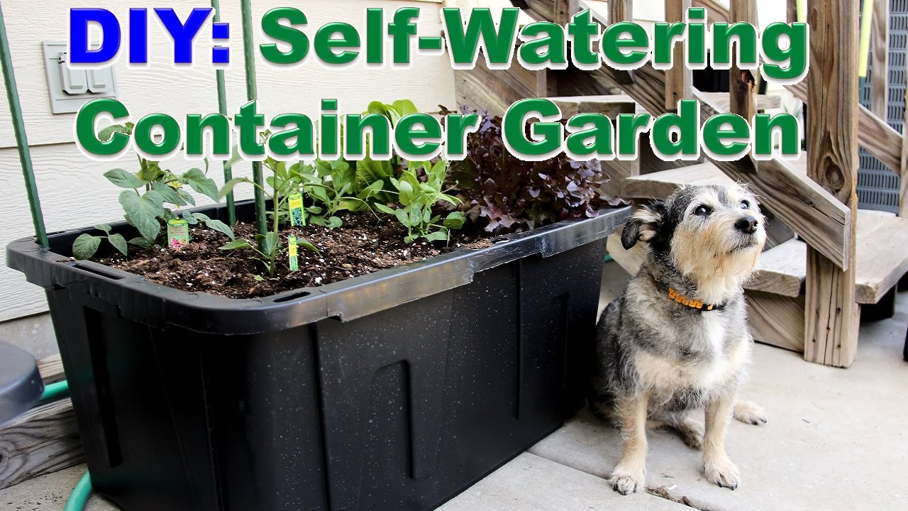 Diy Self Watering Container Garden Youtube