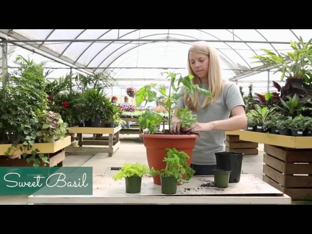 Container Garden  Recipe:  Grow Fresh Tomato Sauce