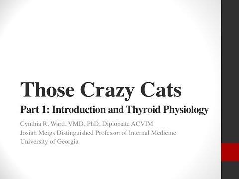 Crazy Cats, Part 1: Feline Hyperthyroidism: Introduction and Thyroid Physiology