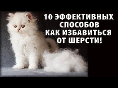 Как очистить квартиру от аллергенов кошки