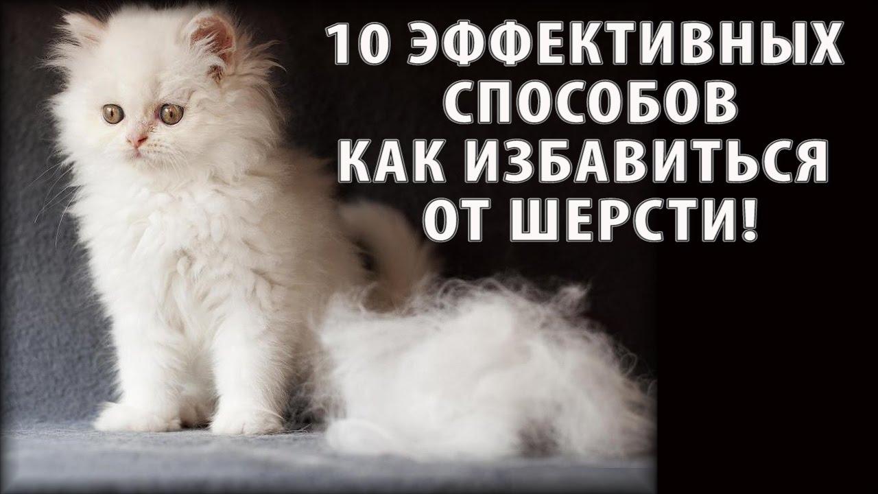 Избавится от шерсти кота