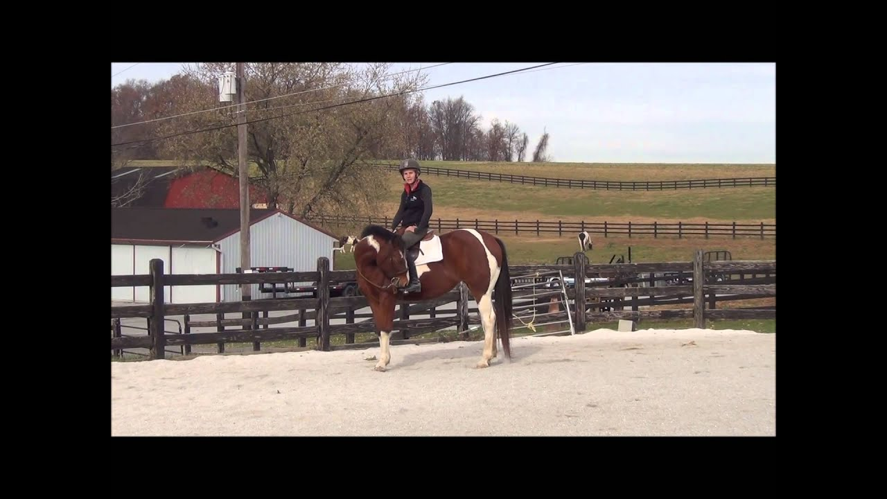 How to Keep a Horse Calm While Riding How to Keep a Horse Calm While Riding new foto