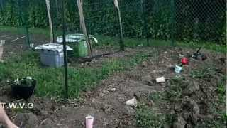 Planting Tomatoes, Planting Peppers The Wisconsin Vegetable Gardener Show 31